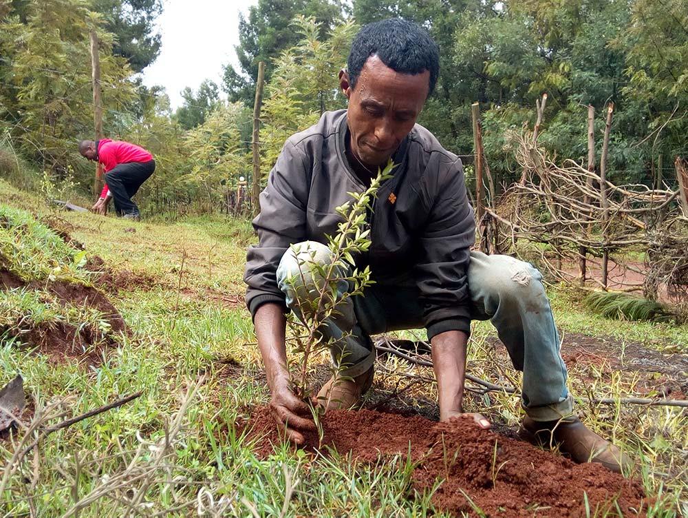 Mann bei der Aktion Green Legacy pflanzt Baum in Äthiopien