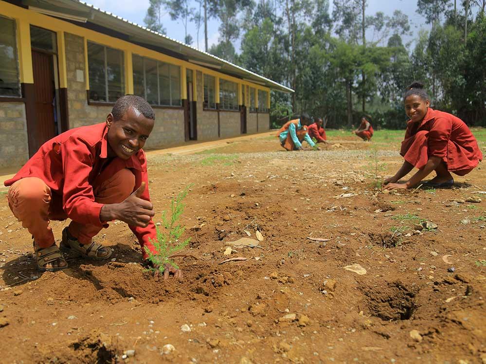 SchülerInnen pflanzen Setzlinge
