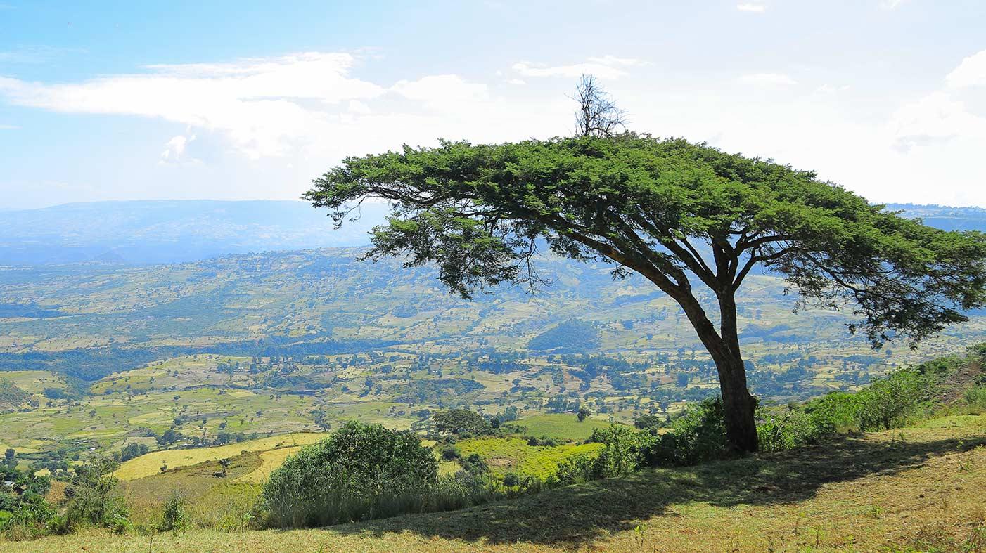 Baum in Äthiopischer Hochebene