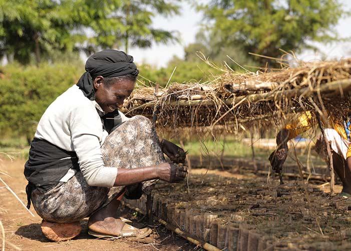 Frau bearbeitet die Erde in Baumschule