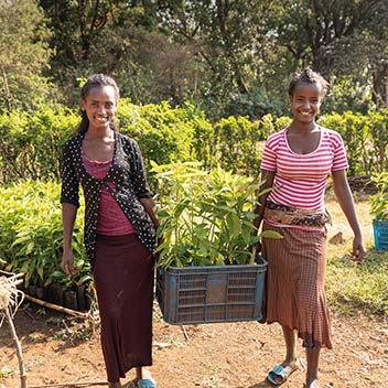 Zwei Mädchen in Äthiopien halten eine Kiste mit Baumsetzlingen