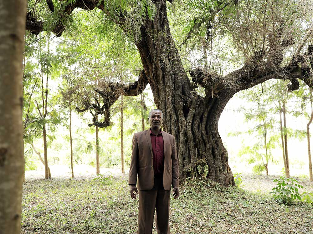 Ein Mann setht vor einem großen Baum.