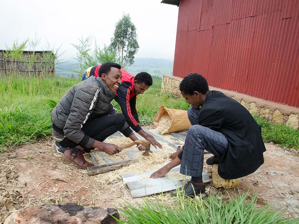Drei Männer söhen Pilzsporen aus.