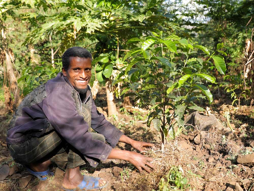 Äthiopischer Mann beim pflanzen von Kaffeesetzlingen