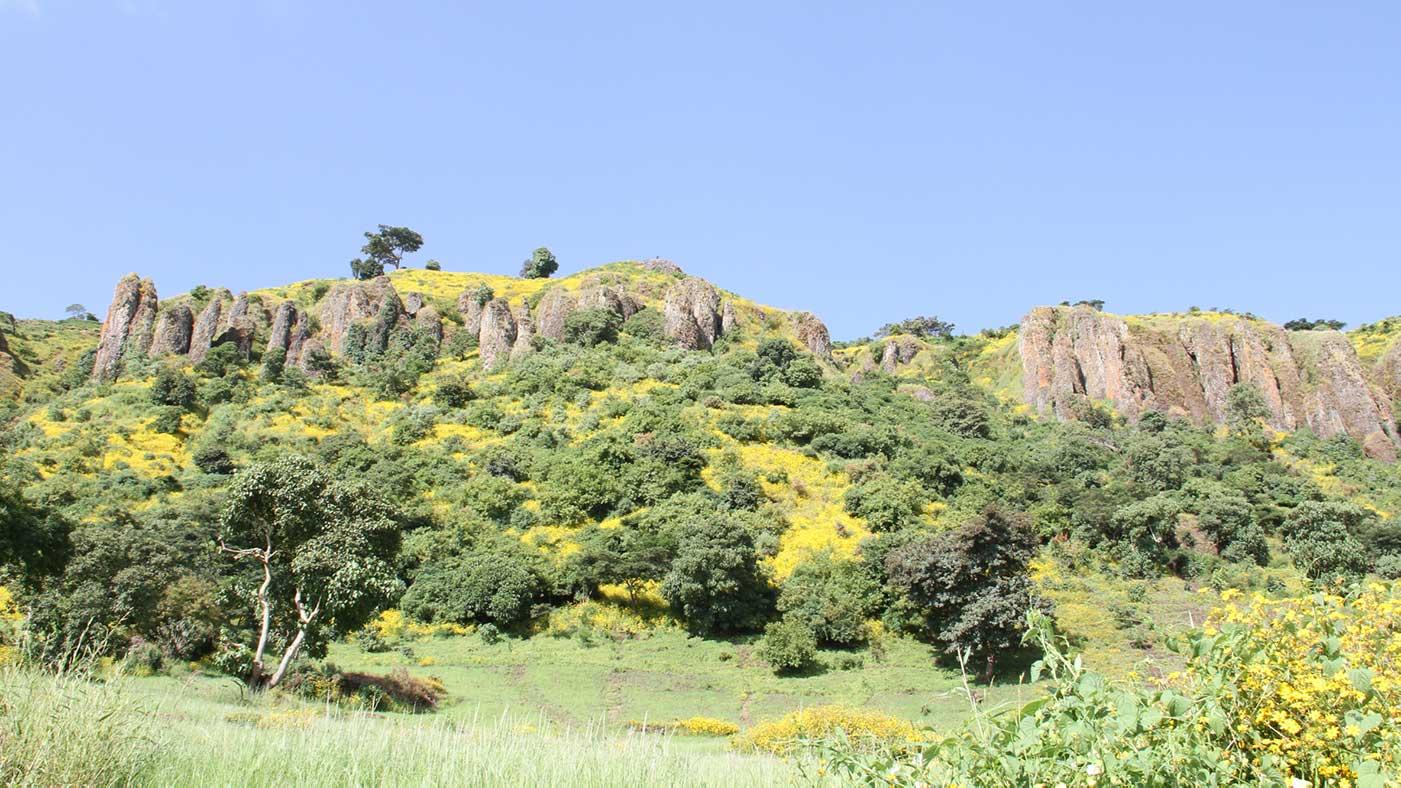 Äthiopische Grüne Landschaft