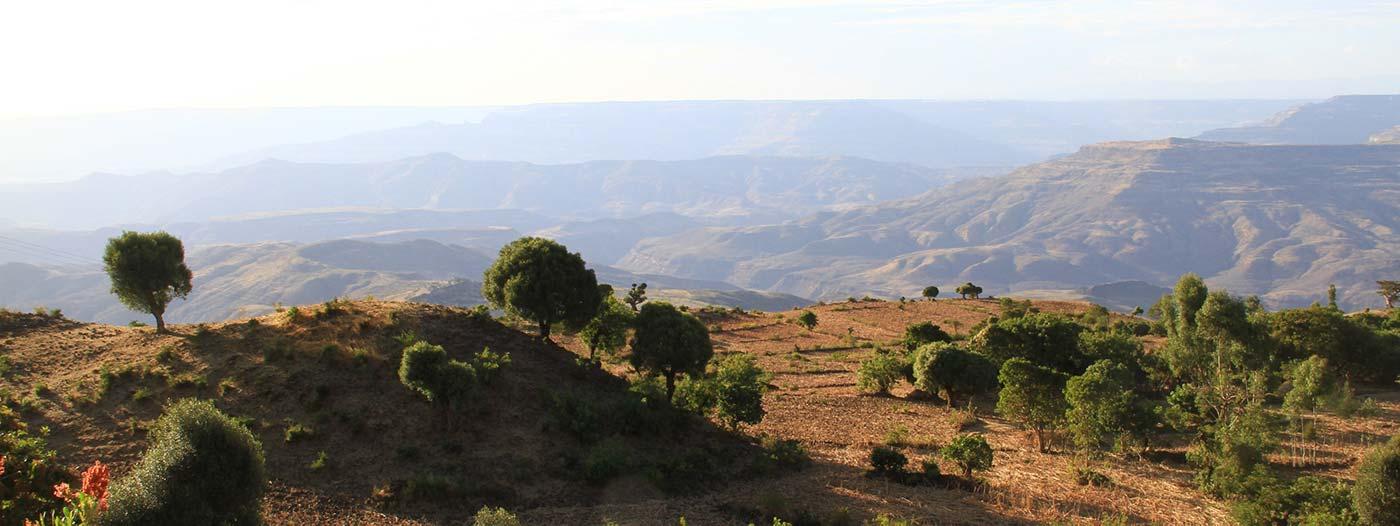 Panorama mit Bäumen und Hügeln in Derra Äthiopien
