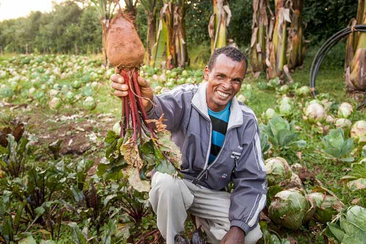 Mann in Äthiopien kniet auf seinem Feld mit Gemüse in der Hand