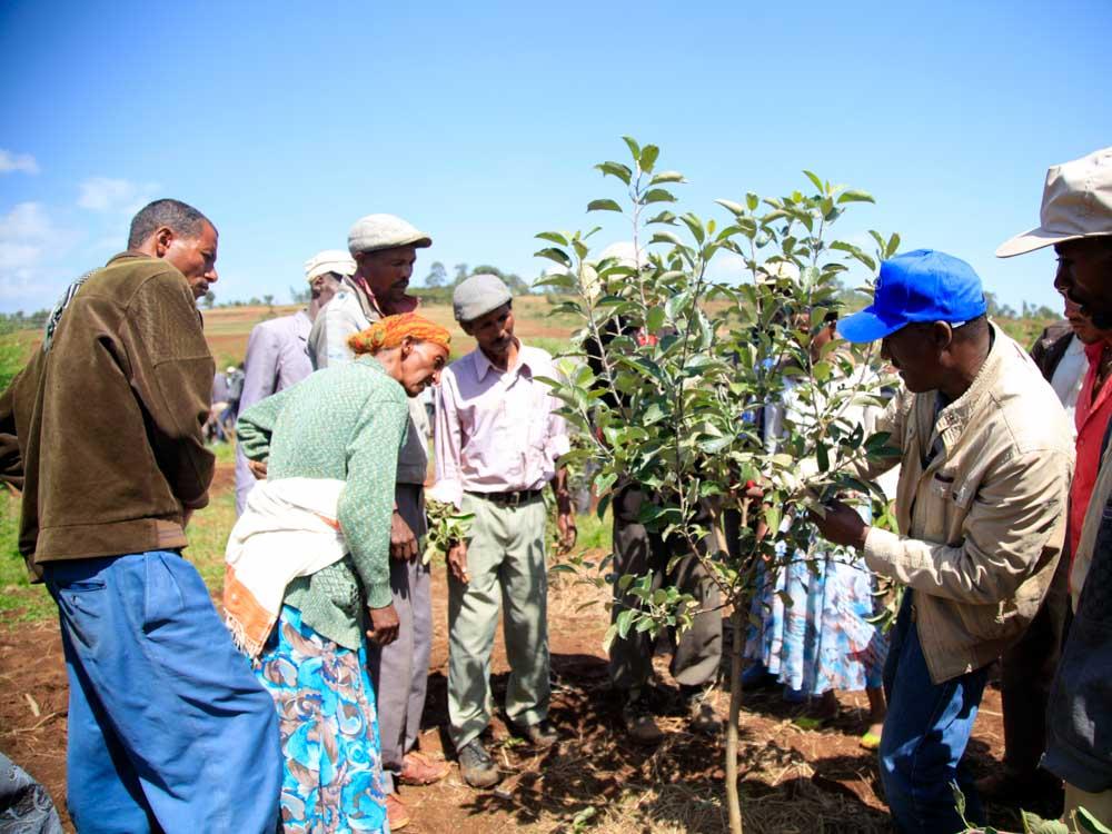 Menschen in Äthiopien stehen um einen Baum