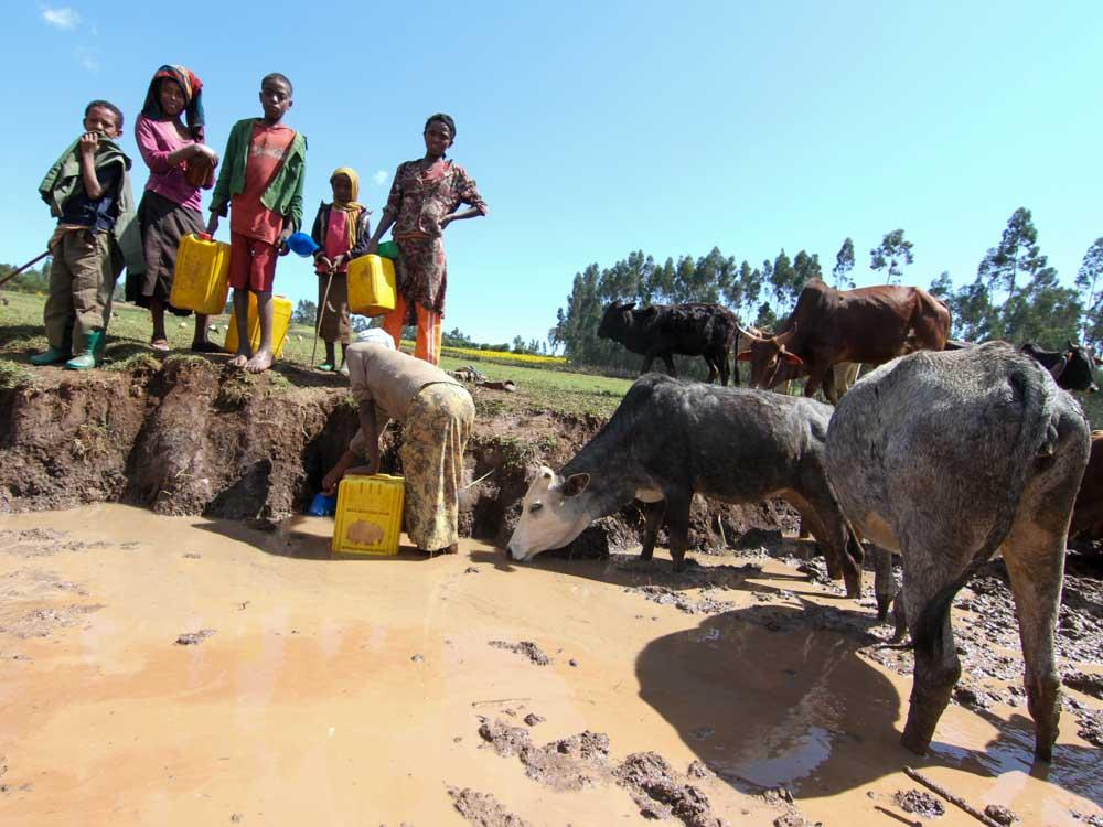 Kinder und Frauen füllen Wasser aus einer Pfütze ab gemeinsam mit Rindern